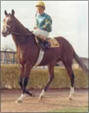 Photo of Northern Dancer