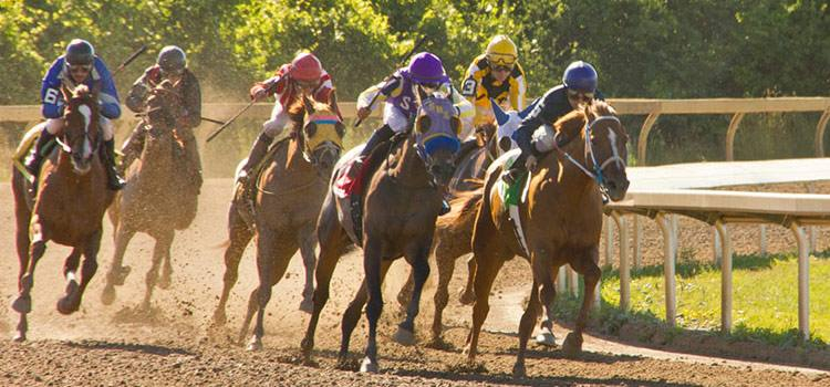 Fort Erie Racing - Free Race Programs