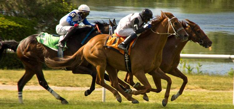 Photo of horses racing